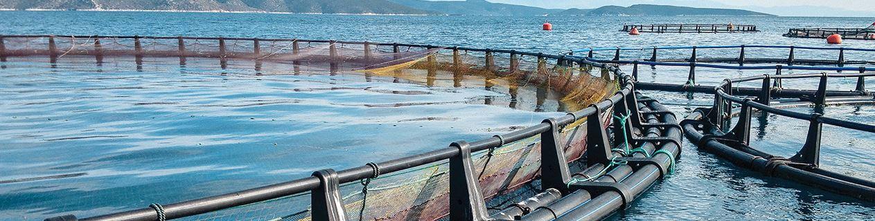 WEB_HomepageBanner_Aquaculture_v1