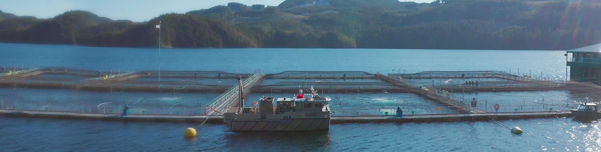 Aquaculture Testimonial